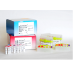 HSV1, HSV2, VZV R-gene<sup>® </sup>
