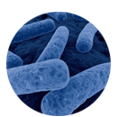 Gestión de infección por C. difficile